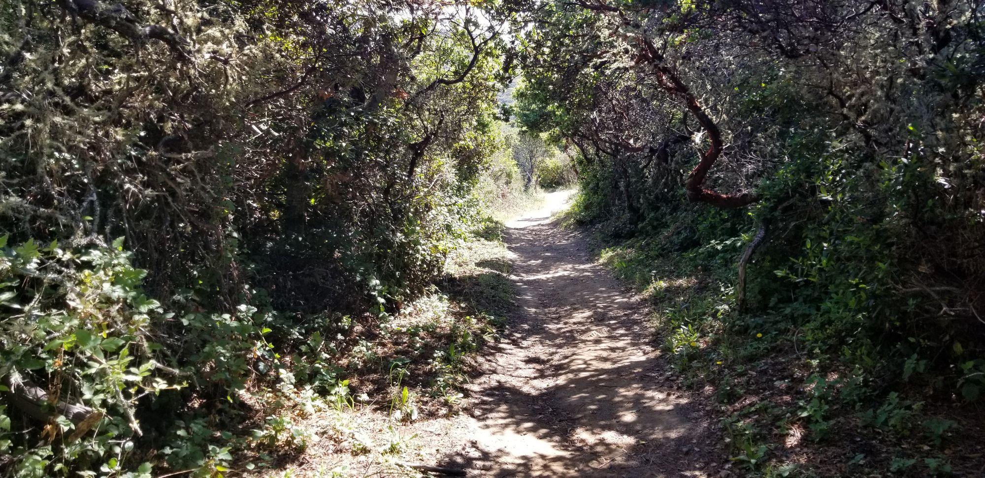 Taken on the Montara Mountain Trail